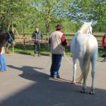 Attribution des chevaux